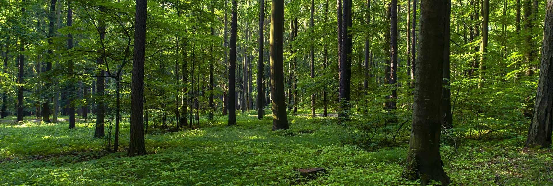 ormanları koruyalım ile ilgili görsel sonucu